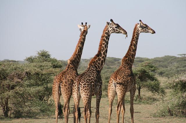 טיול מאורגן לטנזניה בפסח