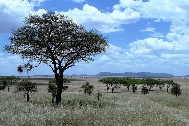 טיול ספארי באפריקה